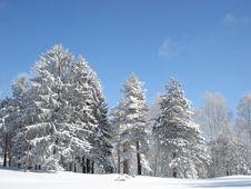 Free Winter Idila Royalty Free Stock Photo - 4402725