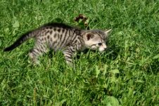 Free Kitty Royalty Free Stock Image - 4402886
