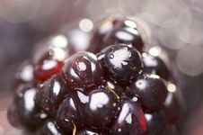 Free Macro Blackberries With Water Drops Stock Photo - 4404690