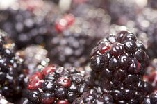 Free Macro Blackberries With Water Drops Royalty Free Stock Photography - 4404697