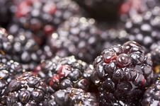 Free Macro Blackberries With Water Drops Royalty Free Stock Images - 4404709