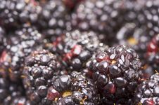 Free Macro Blackberries With Water Drops Royalty Free Stock Photos - 4404758