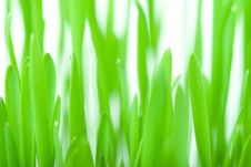 Free Green Grass Background Royalty Free Stock Photography - 4405947