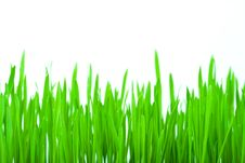 Free Isolated Green Grass Stock Photo - 4405970