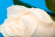 Free Wet Macro Rose Royalty Free Stock Image - 4406056