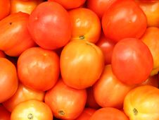 Free Tomatoes Royalty Free Stock Images - 4406069