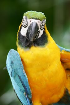 Free Blue & Yellow Macaw Stock Photos - 4406693