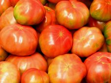 Free Plump Tomatoes Stock Photos - 4406753