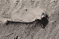 Free Fish Bone Stock Image - 4407251