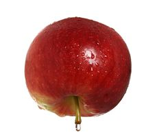 Free Red Apple With Drop Of Water On The Stem Royalty Free Stock Photos - 4407848