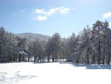 Free Sunny Winter Day Royalty Free Stock Photos - 4407858