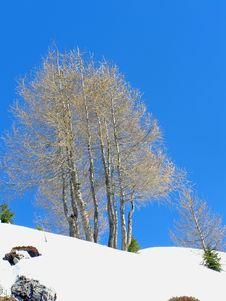 Free Winter Trees Royalty Free Stock Photos - 4408278