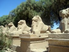 Free Karnak S Sphinx Alley Royalty Free Stock Images - 4408319