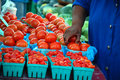 Free Juicy Tomatoes Royalty Free Stock Photos - 4414278