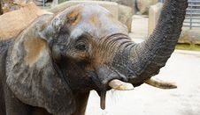 Free Old Elephant Close-up Stock Image - 4410601