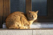 Free Cat Stock Image - 4413481