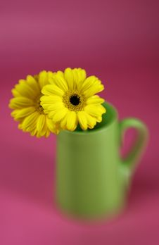 Free Yellow Gerbera Daisy Royalty Free Stock Photography - 4413757
