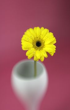 Free Yellow Daisy Stock Photos - 4413793