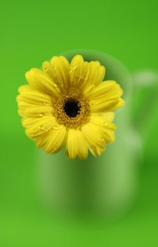Free Daisy On Green Stock Photos - 4413803