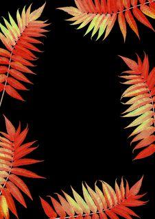 Free Flaming Scarlet Rowan Leaves Royalty Free Stock Photo - 4414015