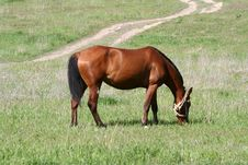 Free Horse Royalty Free Stock Photography - 4414547