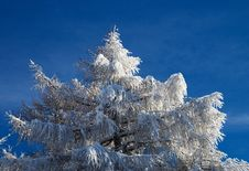 Fur-tree On A Background Of The Blue Sky Stock Photography