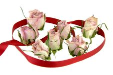 Free Dead Rosebuds Royalty Free Stock Photos - 4415578
