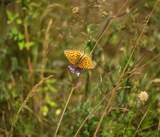 Free Butterfly On Flower Royalty Free Stock Photo - 4415735