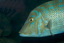 Free Fish Stock Photo - 4416310