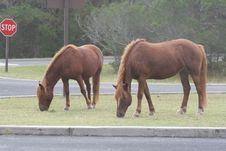 Free Wild Ponies Royalty Free Stock Photo - 4416335