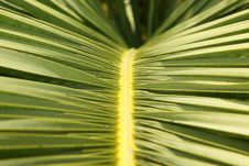 Free Palm Tree Royalty Free Stock Image - 4416366