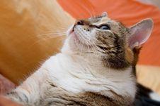 Free Cat Portrait Stock Image - 4416461