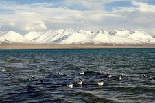 Free Birds Swim In Lake Under Snow Covered Mountain Royalty Free Stock Photo - 4417715
