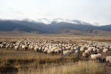 Free A Sheep Flock Walking Towards The Snow Mountain Royalty Free Stock Photography - 4418317