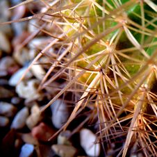 Free Thorny Cactus Stock Images - 4418494