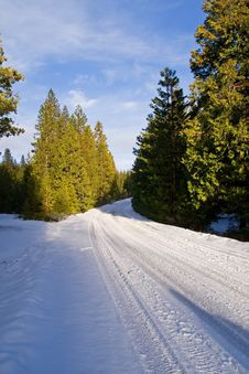 Free Snowy Road Through Forest Stock Images - 4418654