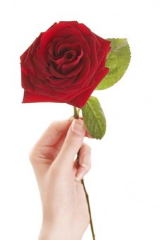 Free Woman Holding Beautiful Red Rose Stock Image - 4419311