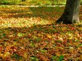 Free Carpet Of The Fallen Autumn Leaves Royalty Free Stock Photo - 44129225