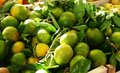 Free Green Italian Mandarines Royalty Free Stock Photos - 4422718