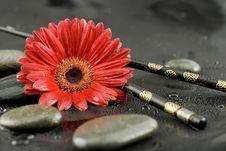 Free Gerbera Flower Stock Photo - 4420040