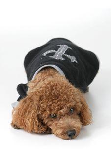 Free Dog Royalty Free Stock Image - 4420176