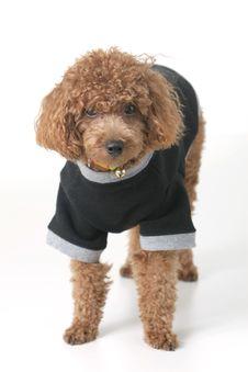 Free Puppy Royalty Free Stock Photo - 4420205