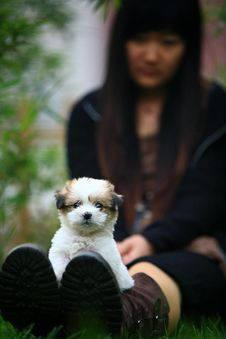 Free Baby Dog S New Life Royalty Free Stock Images - 4421039