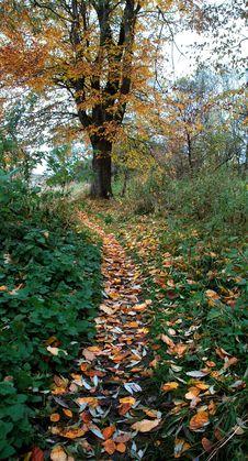 Free Autumn Path Stock Photos - 4421203