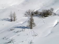 Free Trees In Snow Royalty Free Stock Photography - 4421467