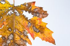 Free Autumn Leaf Stock Photos - 4421523