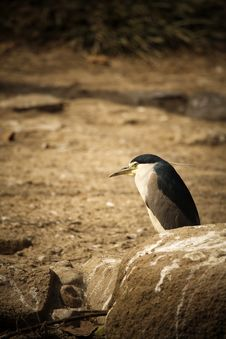 Free A Bird Like Penguin Stock Photography - 4422622