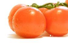 Free Orange Tomatoes Stock Photo - 4422880
