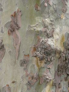 Free Vertical Bark On Tree Stock Photo - 4424780