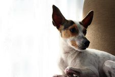 Free Relaxing Dog 2 Royalty Free Stock Photos - 4426998